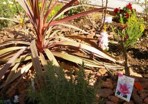 """慶應の「銀杏並木」を借景(しゃっけい)にしているというビューポイントには、濃い紫の長い葉が特徴の""""コルジリネ""""が。周囲には横浜開港150周年を記念し誕生したバラ「はまみらい」が3株植えられている"""