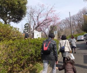 今年も「綱島桃まつり」の日がやってきました。住宅街の坂を上り、会場まであと一息です