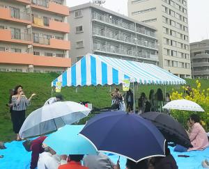 最後は傘の花もいっぱいに。美しい菜の花を愛でる綱島の皆さんの心がとても美しく感じられました。来年もまた、この場所で!