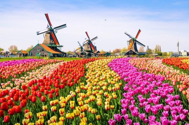 阿姆斯特丹交通