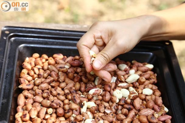 步驟三:花生炒熟後,置於大盤內,用手搓去花生衣。去掉的花生衣,不要扔掉,收集起來,可當作植物肥料。