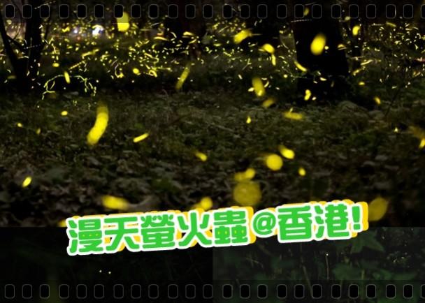 香港打卡:夜賞螢火蟲 眼看手勿動|即時新聞|港澳|on.cc東網