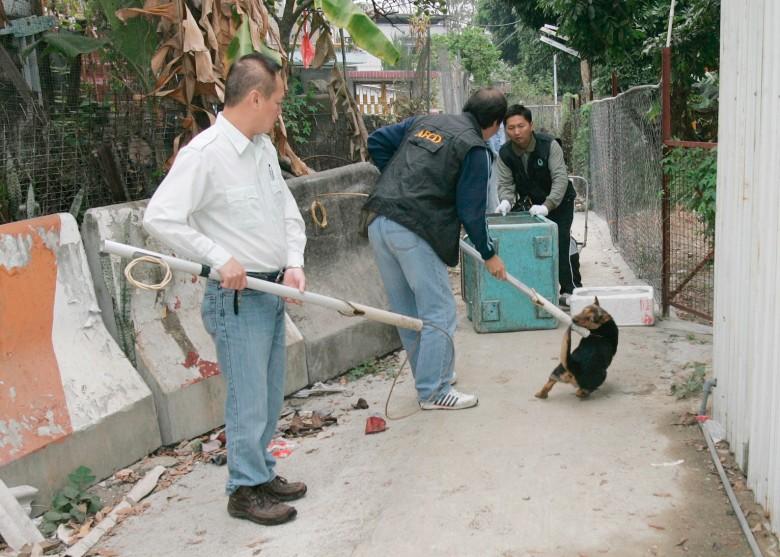 漁護署去年捕獲2400狗流浪 多被安樂死 - 東網即時