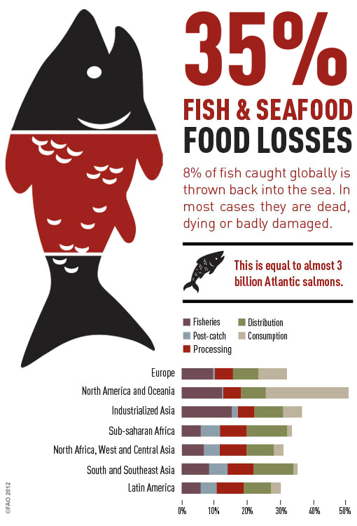 Fish & Seafood Loss by UNFAO