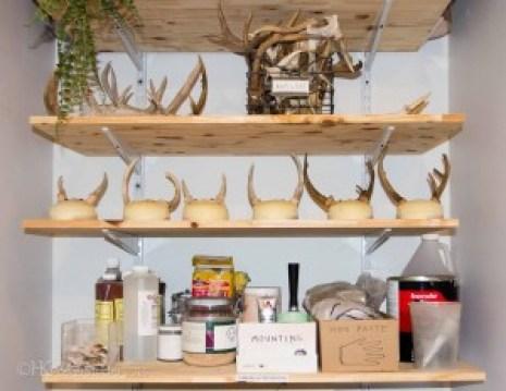 Organized Artist supply shelves