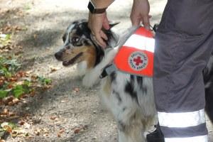 Mit der Decke auf dem Rücken ist der Hund als Mitglied der Rettungshundestaffel gekennzeichnet.