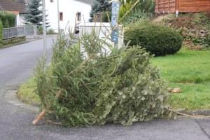 Weihnachtsbäume werden wieder eingesammelt