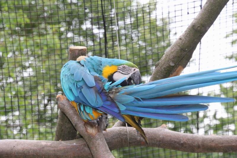 In der Vogelburg Weilrod lassen sich viele Papageien beobachten.