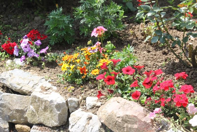 Neben den Rosen gibt es jahreszeitlich variierend viele andere Blumen zu entdecken.