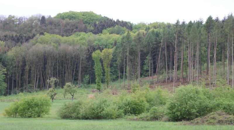 Dornburg Wald Schäden