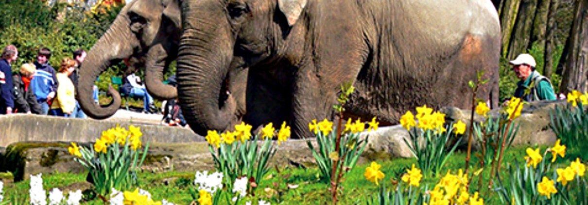 Ostererlebnis im Tierpark Hagenbeck