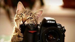 Cat eating camera photo