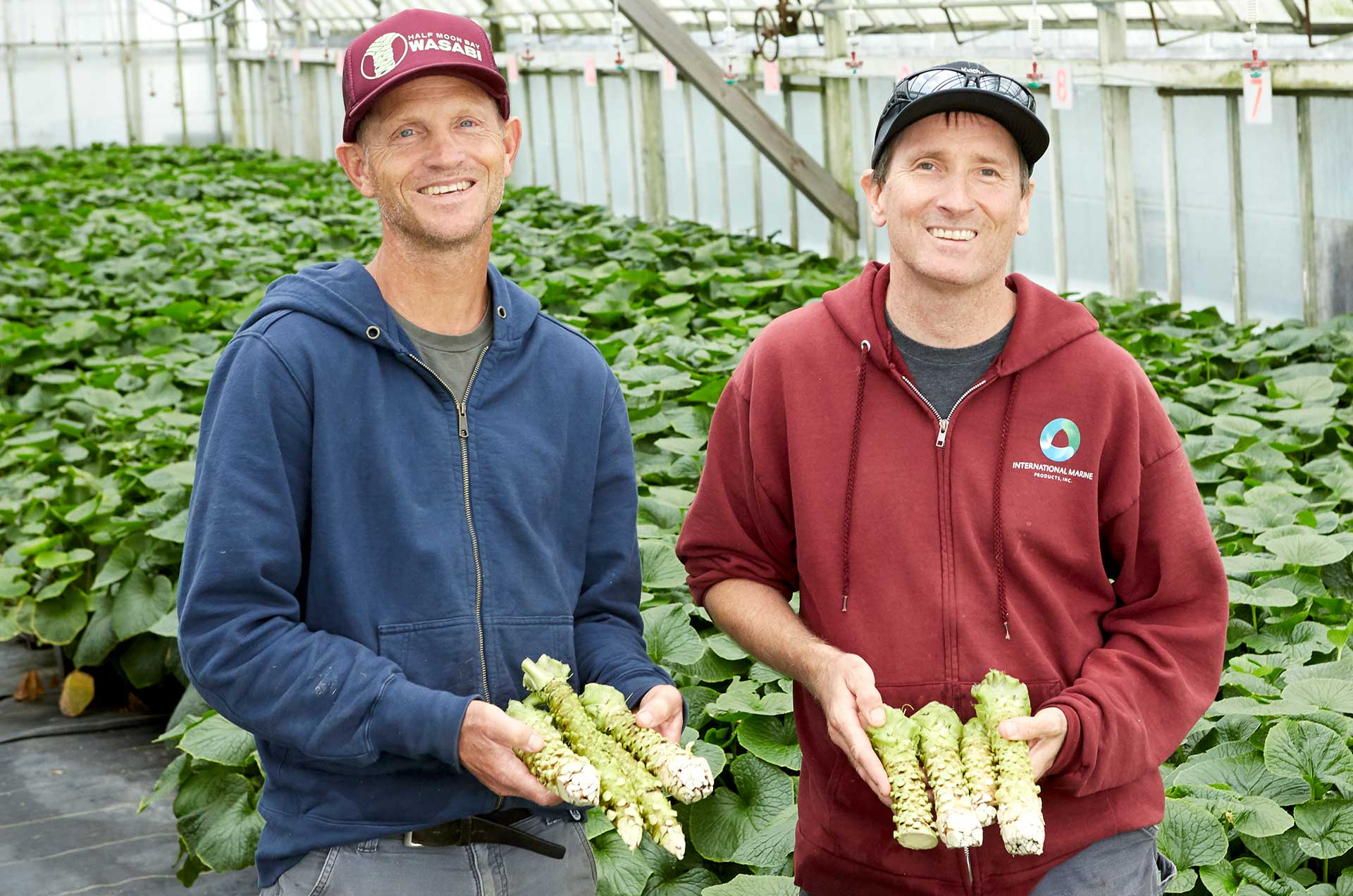 Tim and Jeff of Half Moon Bay Wasabi