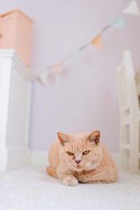 Fotograaf-Linda-ringelberg-fotografie-fotograaf-vragenuurtje-baby-lifestyle-kamer-meisje-kat