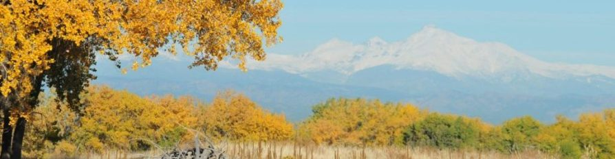 View of a snow capped Longs Peak in the distance with yellow autumn trees in the foreground