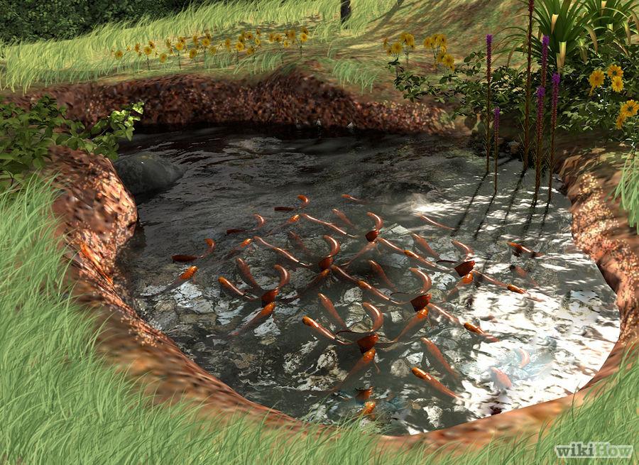 7 Ideas for Building a Koi Fish and Backyard Pond - Home ... on Backyard Koi Pond Designs  id=50909