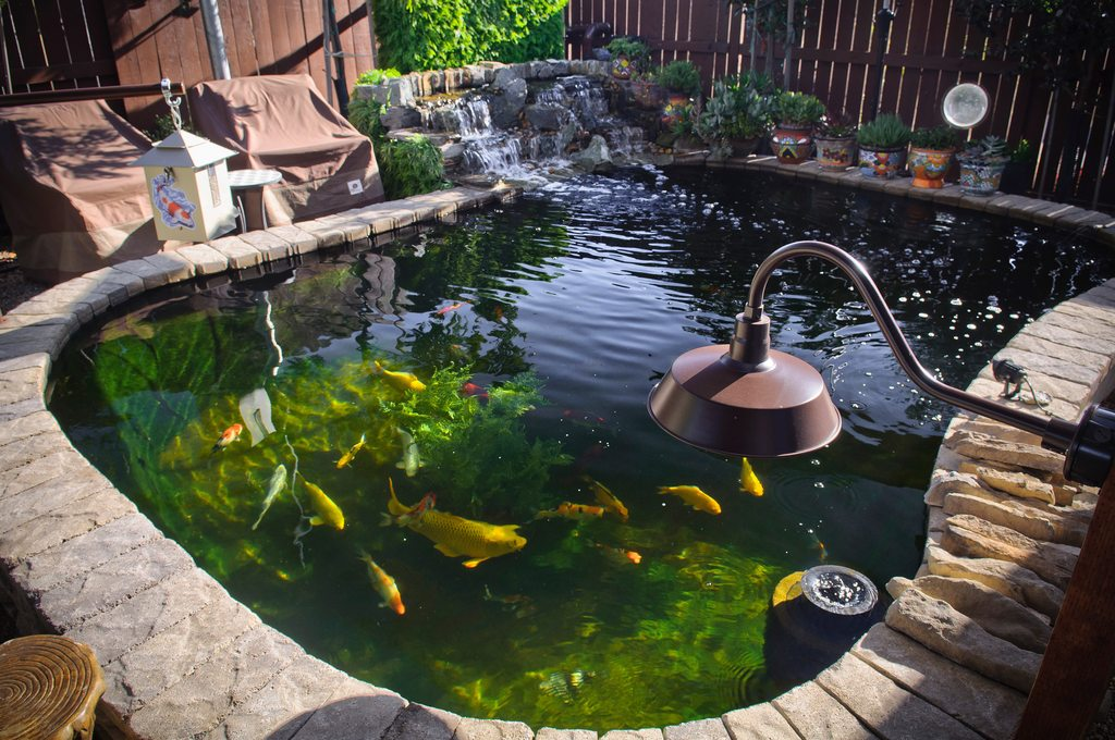17 Cool DIY Koi Pond Ideas For Your Backyard - Home And ... on Koi Ponds Ideas id=31012