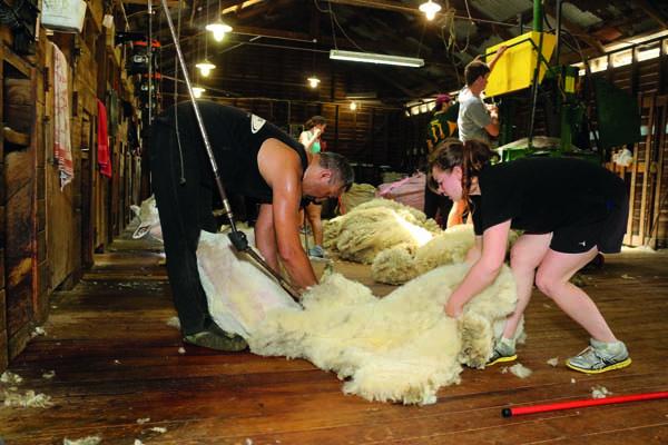 Don Shearing.jpg