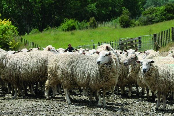 Don ewes.jpg
