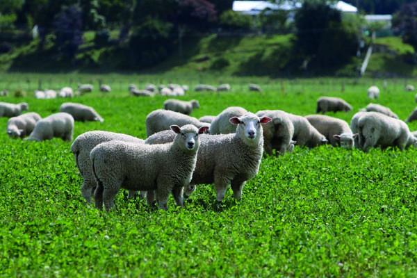 Donald Lambs.jpg