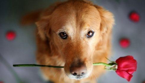 สายพันธุ์สุนัข ทำนายนิสัยเจ้าของน้องหมา