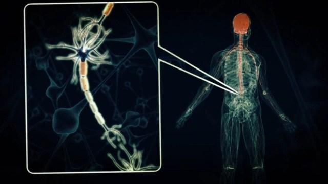 VX có khả năng vô hiệu hóa hoạt động của các cơ, khiến thần kinh tê liệt rồi chết chỉ sau vài chục giây.