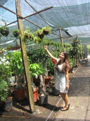 hoa treo trái dừa