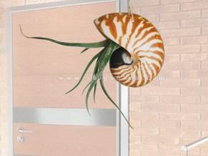 hoa treo với vỏ ốc và cây không khí