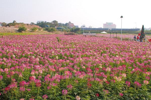 Vườn hoa Túy Điệp