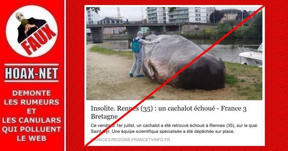 NON, une baleine ne s'est pas échouée à Rennes.