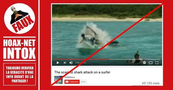 Non, ce surfer n'a pas servi de repas à ce requin…