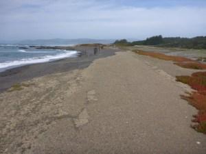 An old coastal logging road, eaten away by the erosive ocean.