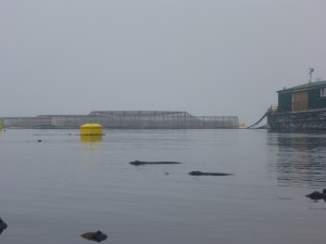 Salmon farm in the Broughtons.