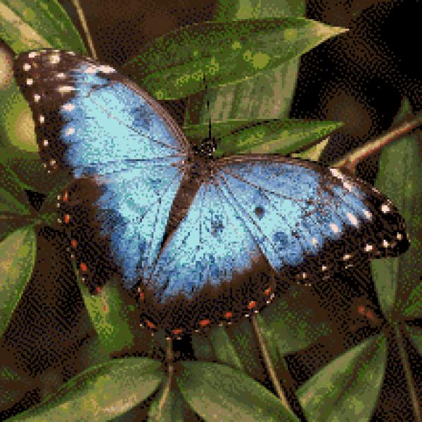 MyHobby borduurpakket - blauwe vlinder