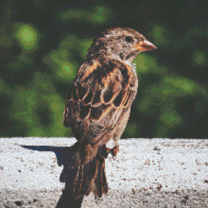 MyHobby borduurpakket - bruine vogel
