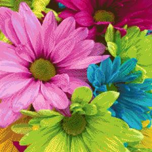 MyHobby borduurpakket - gekleurde madeliefjes