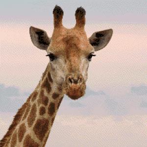 MyHobby borduurpakket - giraf