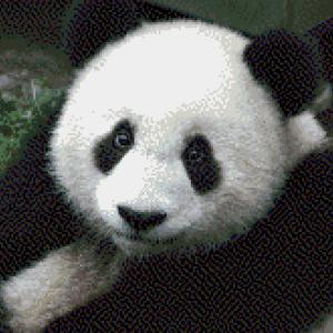 MyHobby borduurpakket - panda