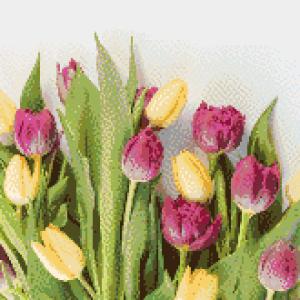 MyHobby borduurpakket - tulpen