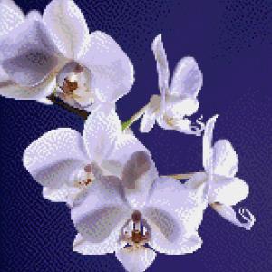 MyHobby borduurpakket - witte orchidee