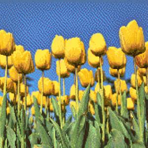 MyHobby borduurpakket - gele tulpenveld