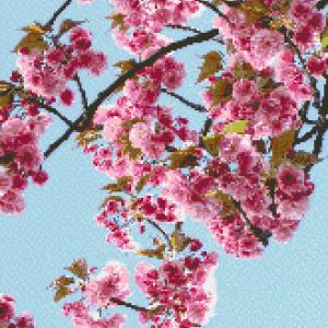 MyHobby borduurpakket - japanse sakura