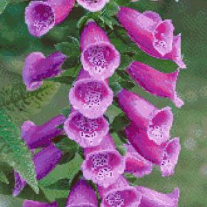 MyHobby borduurpakket - paarse klokbloem