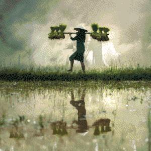 MyHobby borduurpakket - rijstveld