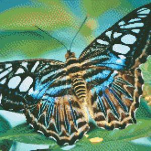 MyHobby borduurpakket - gestreepte vlinder