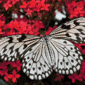MyHobby borduurpakket - witte vlinder op rode bloemen