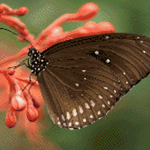 MyHobby borduurpakket - bruine vlinder