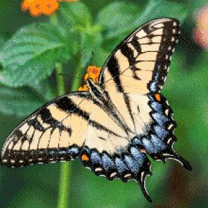 MyHobby borduurpakket - zalmkleurige vlinder