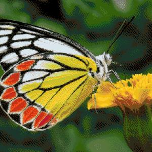 MyHobby borduurpakket - wit geel rode vlinder