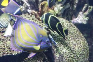 Turkuazoo-akvarium-9